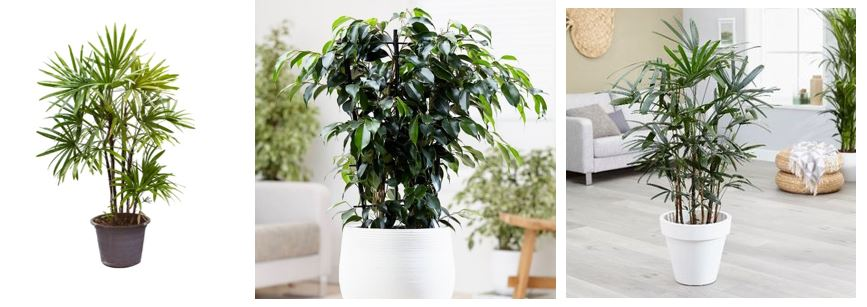 Plants that clean the air while adding ambiance 3